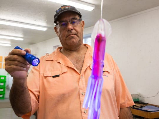 Bill Pino, owner of Squidnation, demonstrates the  fluorescent effect of one of his lures Tuesday, April 4, 2017.