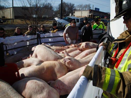 0313 pigs 03.jpg