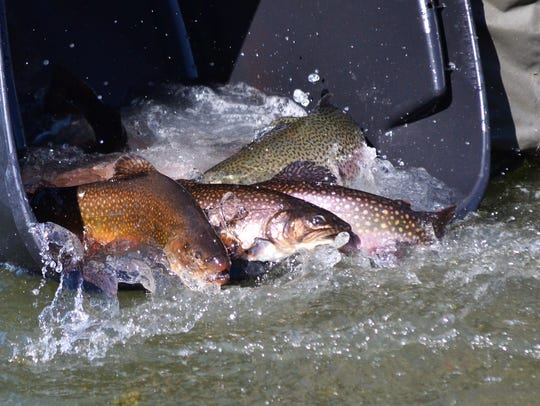 Trout are stocked at Spring Lake by the Shark River