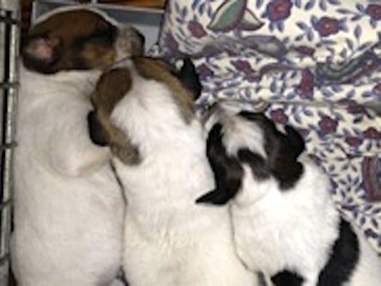 635550988563120143-Puppies