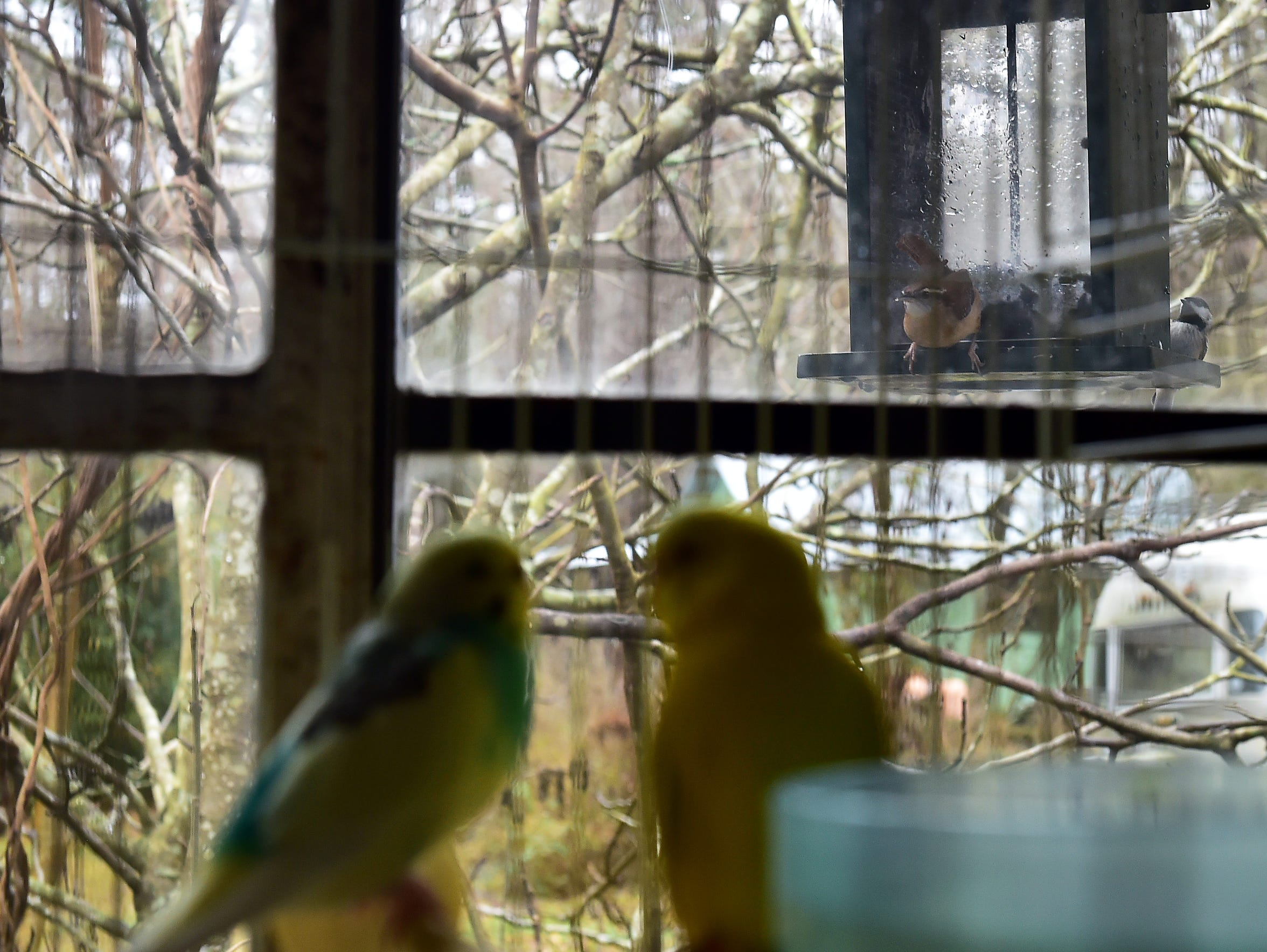 Two parakeets in a cage in Brooke Conner's bedroom stare out the window at a bird feeder.