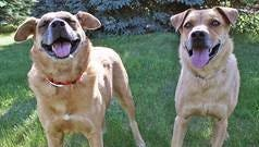 Marcus and Marcella, two German Shepherd mixes, have spent their last 7 years in a shelter in Corpus Christi, Texas.