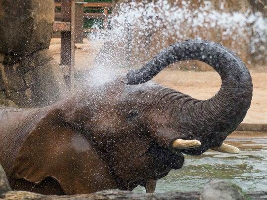 Elephants at Zoo Knoxville are given baths to help cool off on hot days.