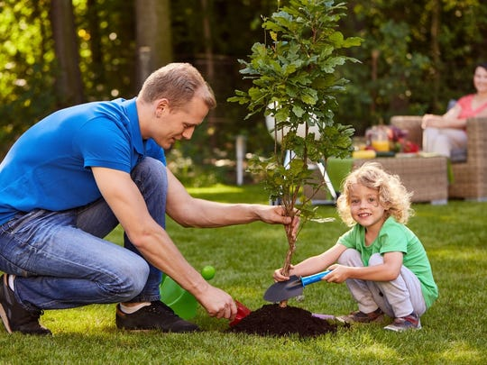 When planting a new tree near power lines, consider