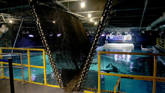 Collect your nerves and take a walk across the Shark Bridge at Adventure Aquarium, with sharks swimming below the cargo net.