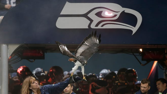 Taima the Augur Hawk flies on the field during player introductions before an NFL football game against the Carolina Panthers, Sunday, Oct. 18, 2015, in Seattle.