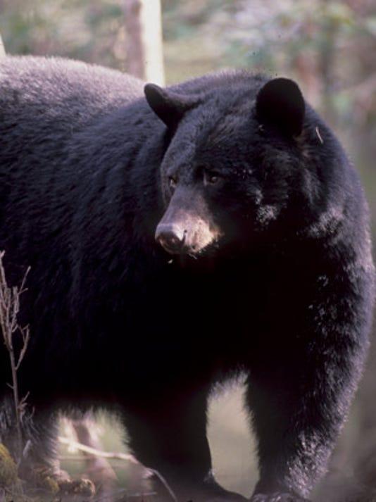 636367084946371876-big-bear.jpg