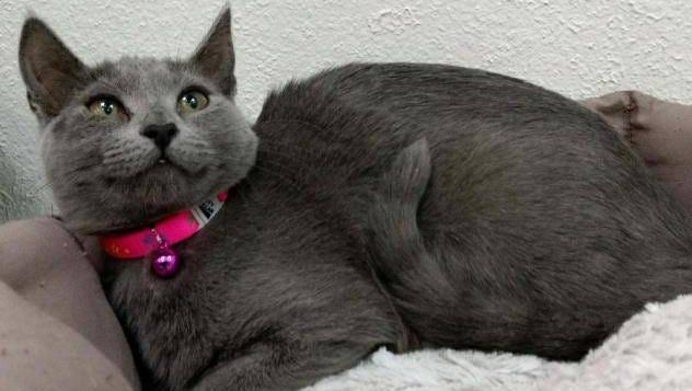 Isn't Gwen a beautiful cat?
