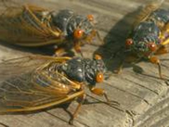 May 18, 2004: Cicadas emerged in Lakeside Park, Kentucky