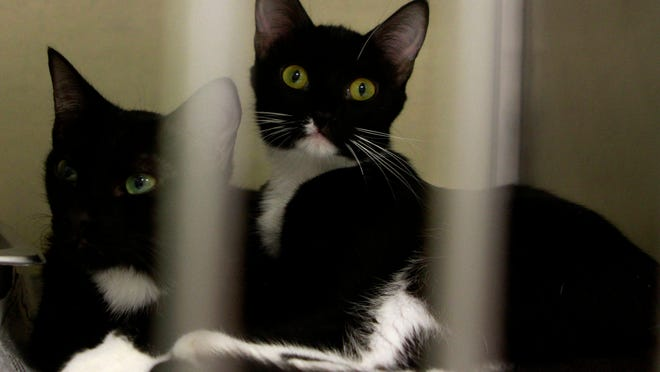 Cats rescued from a Southwest Florida home