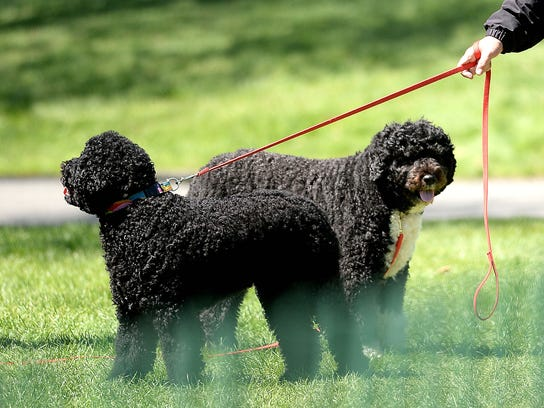 Sunny and Bo Obama, the first dogs, pictured at the