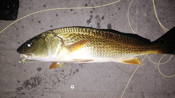 A night trip paid off with trout and a redfish.