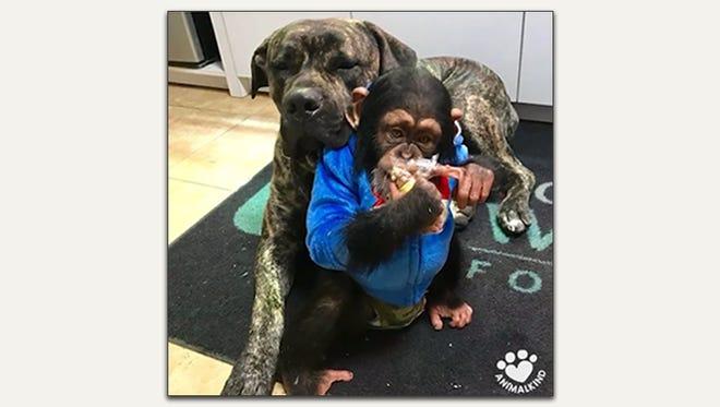 Dog and Monkey best friend.