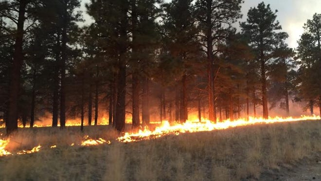 A burnout operation conducted to battle the 431 Fire near Flagstaff on Nov. 29, 2014.
