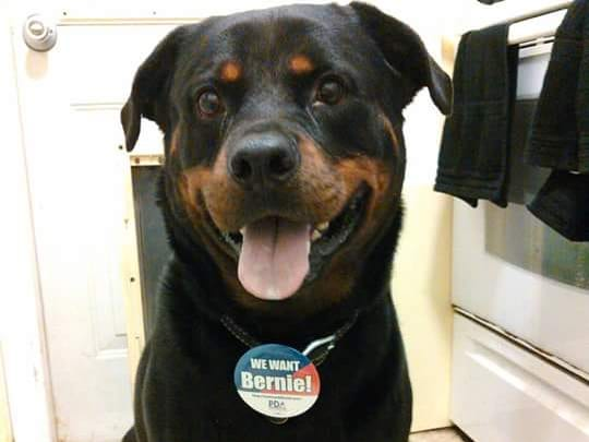 Frank is a 5-year-old Rottweiler. 