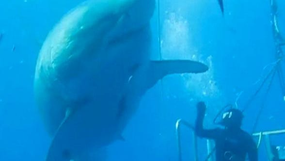 That's one big shark.