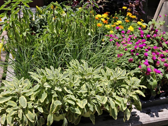 PNI biz agriscaping technologies offers edible landscapes-MONDAY