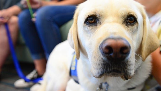 Josiah, Cricket Center Facility Dog, was trained by Canine Companions for Independence in New York. His roll at the Cricket Center in Berlin will be to help children through counciling and court appearances.