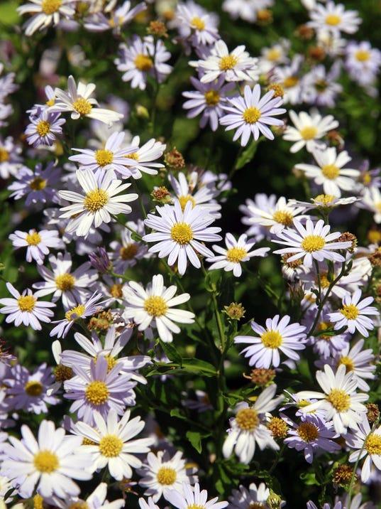 636053231141905073-gardenconserv3.jpeg