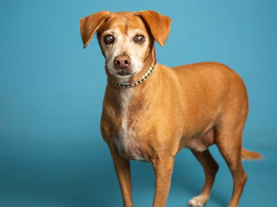 Pancho is available for adoption Jan. 20, 2019, at