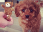 Katy Perry's tour mascot, Butters, is also the latest addition to her furry family.