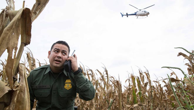 Border Patrol Agent Marcelino Medina standing in a cornfield is given direction from a helicopter.