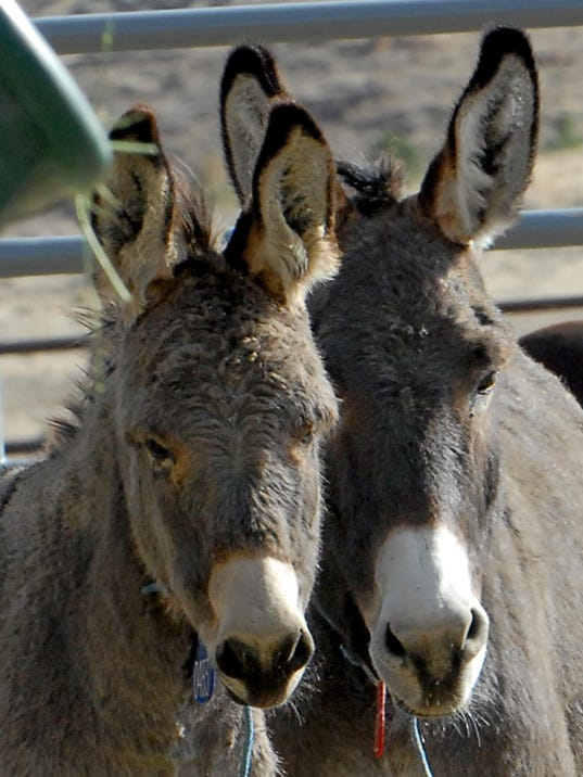 National Wild Horse and Burro Center