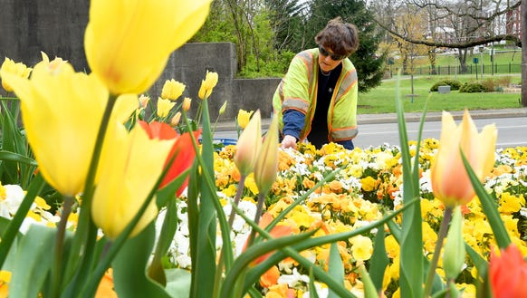 Horticulture assistant Terry Bonner of Staunton's parks