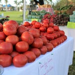 Photos: Opening day 2017, Marco Island Farmers Market