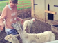 Taylor Swift attempts to corral the sheep in her latest