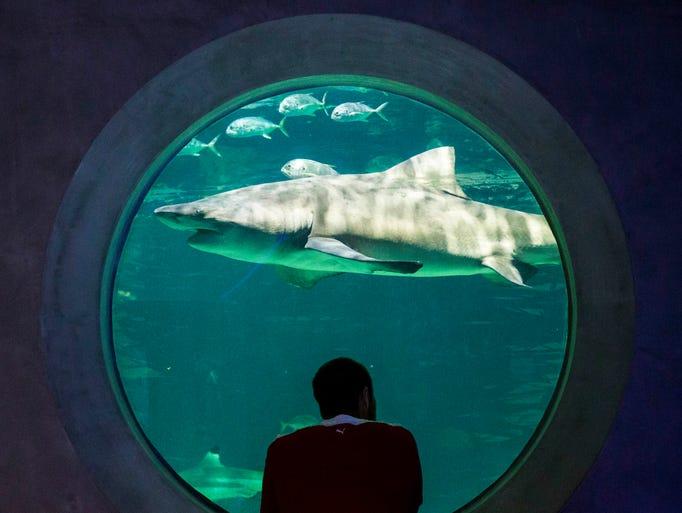 Jeff Stevens looks at shark waters at OdySea Aquarium