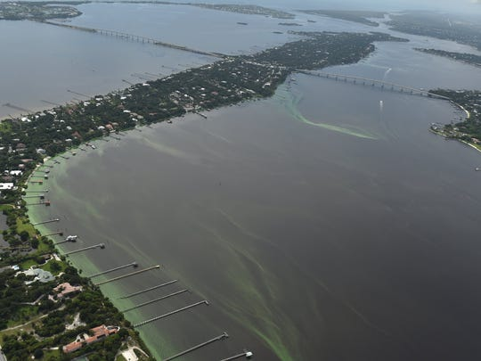 Algae blooms in the St. Lucie River along Sewall's Point on Friday, June 24, 2016, in Martin County.