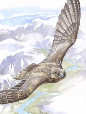 Grey Falcon by Michael Boardman