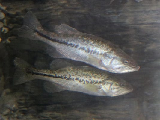 CNC-AquariaFish-03