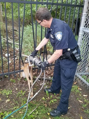 Port Authority Police Officer Ed Benenati uses the Jaws of Life to free a trapped deer in Staten Island, New York on Aug. 30, 2017.