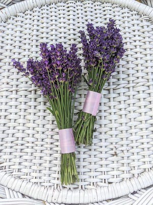 Lavender bundles from Paradise Lavender Farm in Cresco.