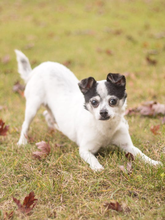 stc-0131-pet-of-the-week-tuesday-patcho-33530488.jpg