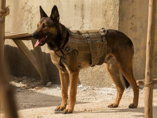 Max Military Dog Breed