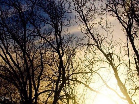 WSF-1125-Trees.jpg