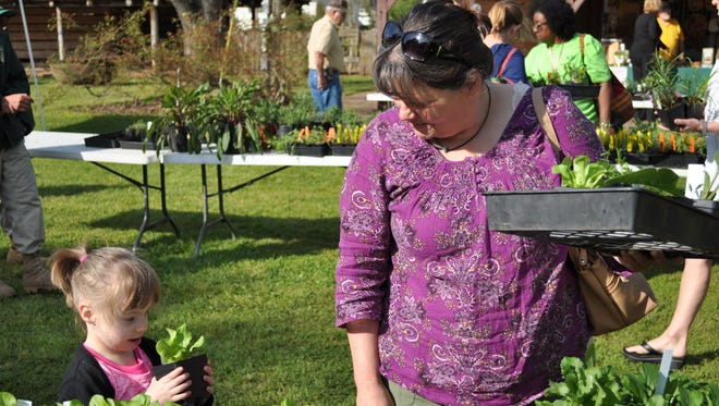 Susan Brown shops with graddaughter Mila Tallman at the Kent Plantation House's annual Herb Day. The Saturday morning sale had more than 3,000 herbs and plants, and within one hour, tables already looked sparse.