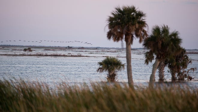 The Fellsmere Water Management Area, which has cost taxpayers $53 million since breaking ground nearly a decade ago, is seen Dec. 20, 2017, in Indian River County. St. Johns River Water Management District bought most of the property for the 10,000-acre reservoir from Fellsmere Joint Venture, which still owns property directly east of the lake.