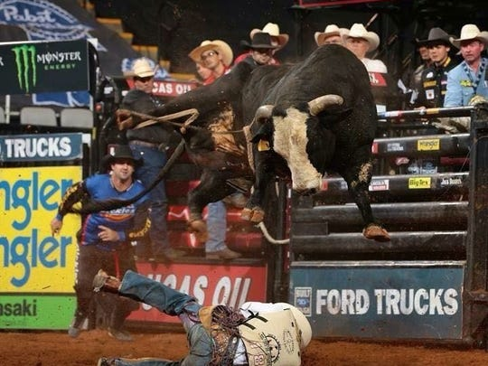 Walk Off is one of the many bulls raised and trained by Jeff Robinson Bucking Bulls in North Carolina.