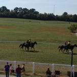 The crowd watching a race last year on a week day at Kentucky Downs.