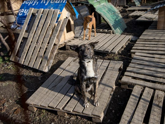 2014-2-6 stray dogs 3