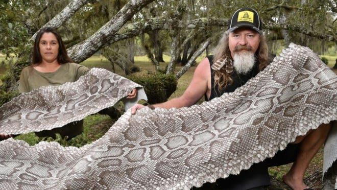 """Dusty Crum, right, star of the Discovery Channel show """"Guardians of the Glades,"""" and his girlfriend, Natalee McKinney, display a 20-foot-long tanned Burmese python skin at a park in Myakka City. In addition to the television show, Crum has started a business, Florida Everglades Collections, selling products made from the tanned hides of the snakes he and other snake hunters capture."""