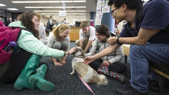 UW students Olivia Gasner (from left) of Horicon, Elizabeth Ryan of Pewaukee, Roman Pertzoborn of Cross Plains, Claire Nagner of Pewaukee and Ian Buchanan-Cates of Charolette, N.C., pet Daisy at the library during a study break. The dog's visit was part of a series of events aimed at reducing stress during finals.