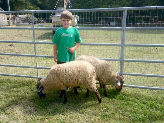 Danny Gallivan stands with two Hog Island sheep at