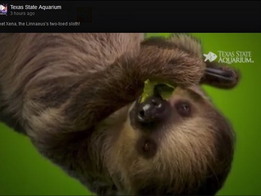 0802_cclo_sloth.jpg