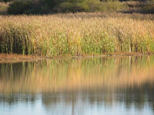 Dead Creek Wildlife Management Area in Addison contains a series of wetlands and is popular with birders and waterfowl hunters.