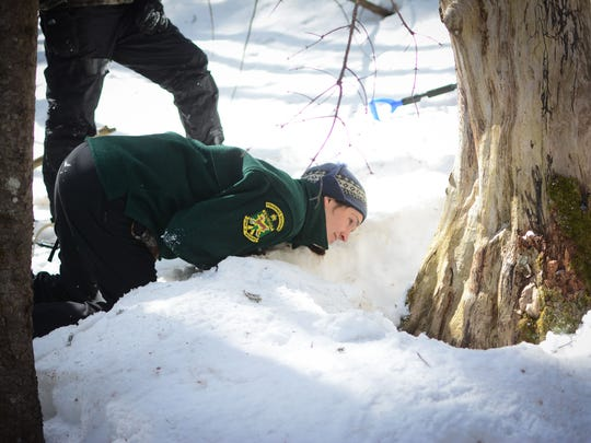 A staff member from the Vermont Department of Fish and Wildlife inspects a tree near Searsburg, March 16, 2014.